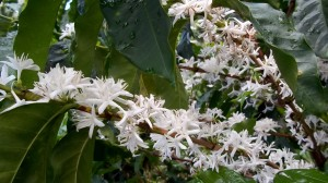 bloom in panama2