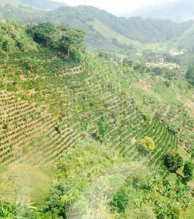 Colombia Finca Paysandu Supremo Grønne bønner
