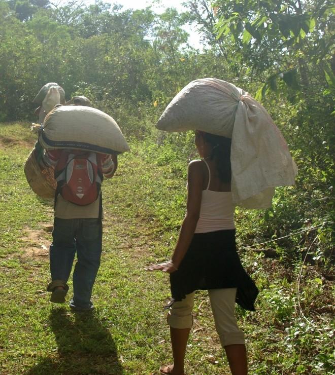 Økologisk El Salvador, Finca Las Nubes
