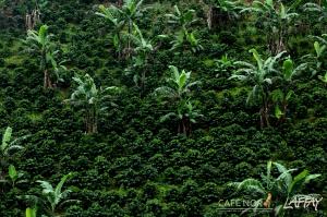 Nicaragua Finca La Fundadora