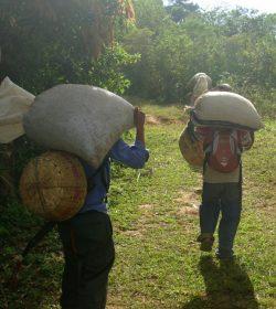 Økologisk El Salvador Finca Las Nubes Grønne bønner